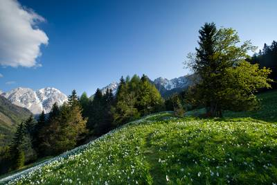 Frühling in der Region Rosental