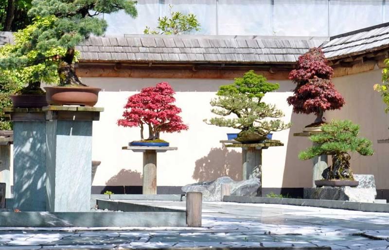 Bonsaimuseum Millstaettersee